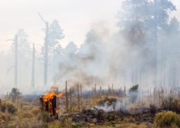 Longer Fire Season Heightens Air Quality-Related Health Concerns - Health Council